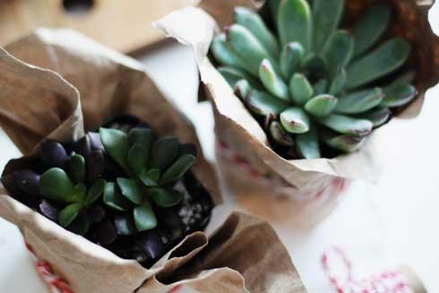DIY: A Succulent Gift