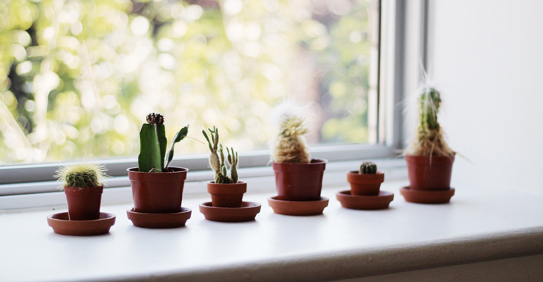 cactii on a window sill